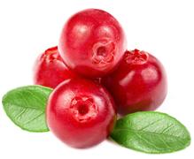 La cranberry bio un fruit de vitalité antioxydant naturel puissant