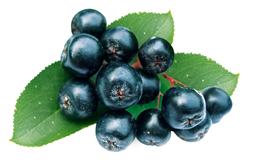 L'aronia bio riche en antioxydants et anti-inflamatoires.
