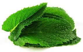 La menthe bio consommée pour pour ses bienfaits calmantes, analgésiques et anesthésiques.