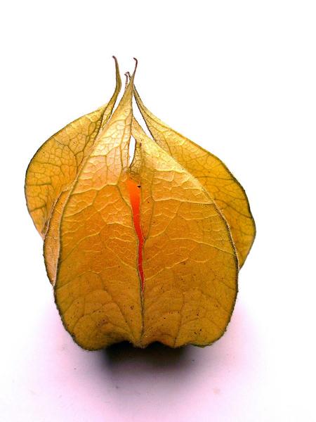 Physalis peruviana bio l'un des fruits les plus antioxydants au monde contre les radicaux libres