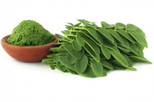 La feuille de moringa biologique antioxydante